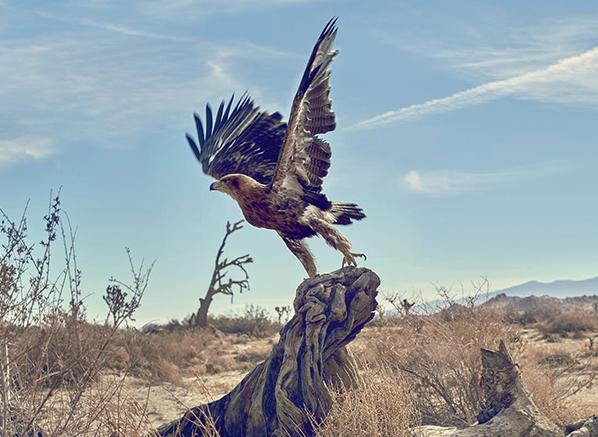 Escentual Editorial-Eagle-598 x 437